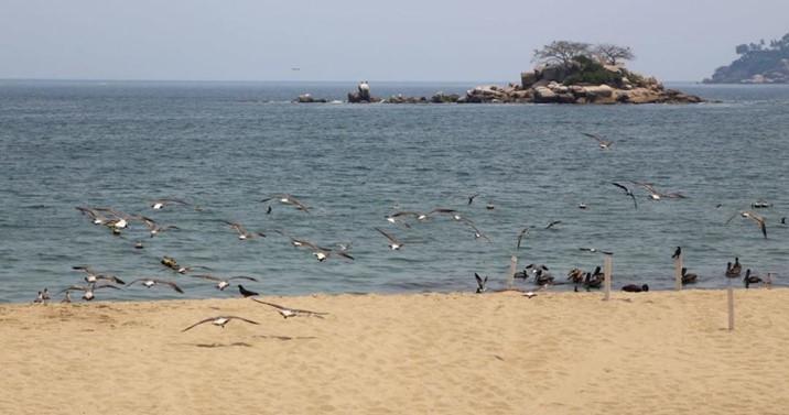 Acapulco prepara cientos de fosas para muertes por Covid-19
