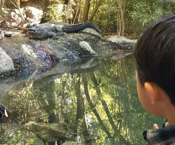 Zoológicos y acuarios de México listos para reabrir de manera segura: AZCARM